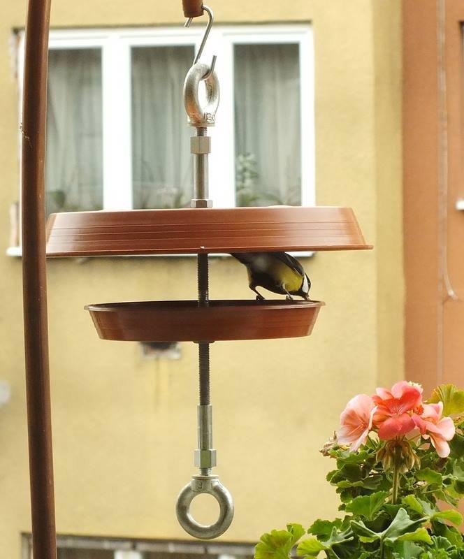 egyetlen madár etető volt)