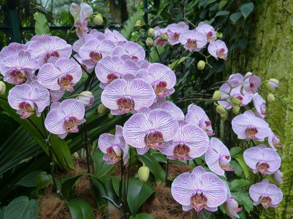 orchids-217999_1920