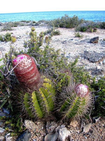 őszi kaktusz kiállítás